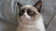 Grumpy Cat е една от интернет знаменитостите, превърнали се в мемета (мийм)