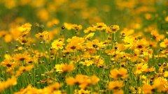 Животът е една поляна с цветя
