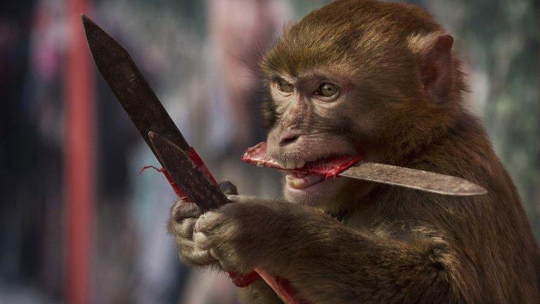 Китайски експеримент направи маймуни по-интелигентни, а част от международната общност реагира остро на това.
