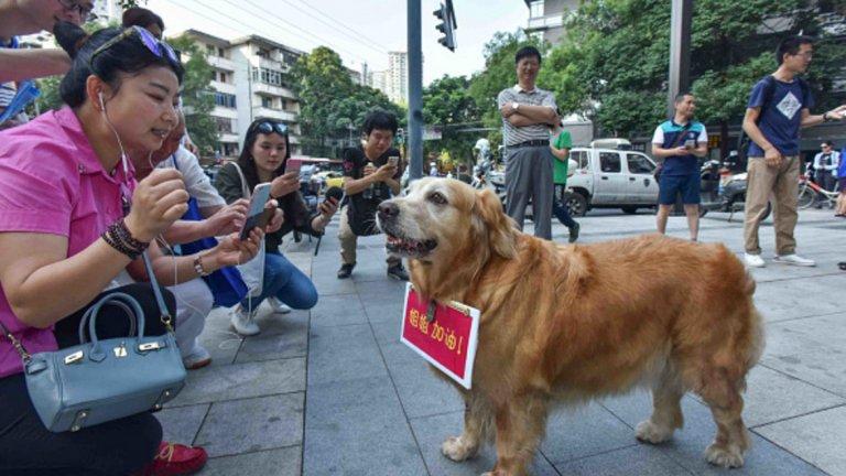 В Китай разрешават само по едно куче
