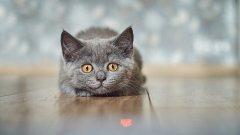 Червената точка - любимата плячка на котаците