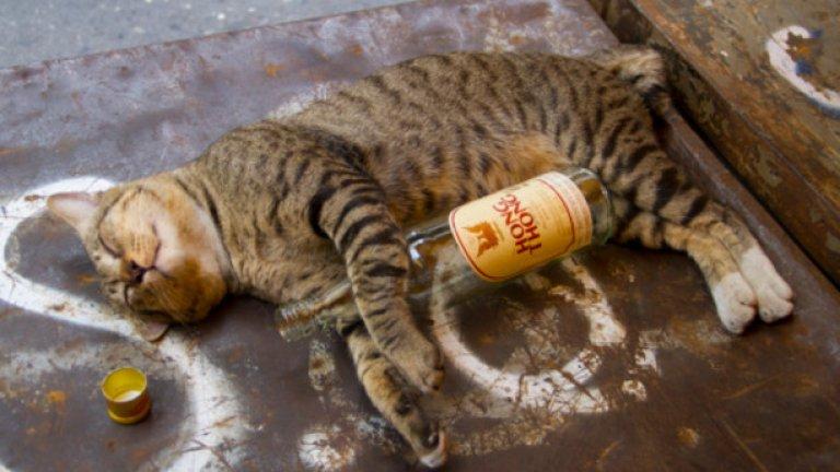 Спирам с извиненията и оправданията и обещавам да пия повече алкохол в онези прекрасни пролетни джазови петъци.