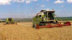 """Общият доход от пшеница в България вероятно доближава 1 млрд. лева. Трудно е да се определи каква точно е печалбата на прекупвачите в това число, но най-дребните """"риби"""" в кампанията за изкупуване на пшеницата миналата година вероятно са """"гушнали"""" поне 20 млн. лв."""