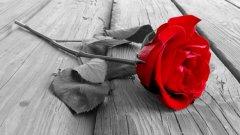 Музейната експозиция за казанлъшката роза ще проследява над 300-годишна история