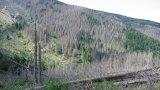Спасяват горите на Витоша със залесяване и с капани срещу корояда