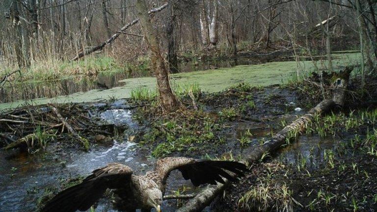 За животните Чернобил е най-опасната райска градина на Земята