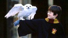 Ами ако Хари Потър всъщност...