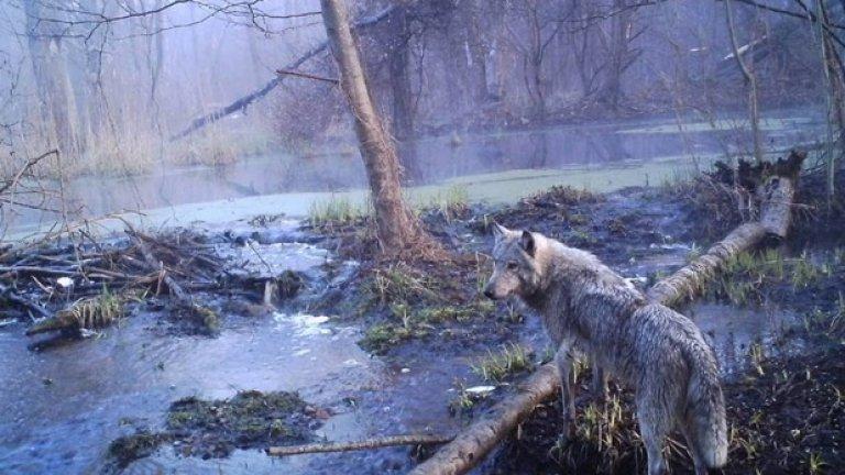 Когато хората ги няма, животните царстват в Припят