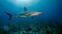 """Ето нашите предложения за 3-те документални филма от """"Седмицата на акулите"""" на Discovery Channel, които не трябва да пропускате"""