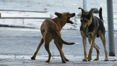 """Според програмата на столичното кметство евтаназията е вариант само при неизличимо болни кучета или на """"видимо агресивни бездомни кучета, които са опасни за здравето на хората и животните"""""""