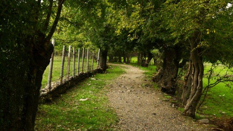 Пътечка, лъкатушеща между широколистни дървета, отвежда до селото