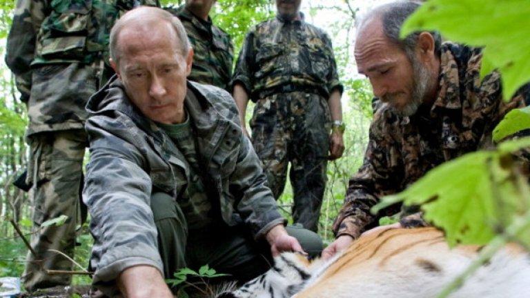 Тигър също не би се опрял на руския държавен глава