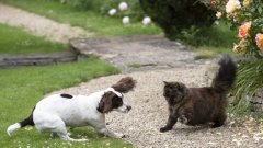 Коткарите са по-аристократични и с по-изискан вкус, а кучкарите са по-комуникативни.