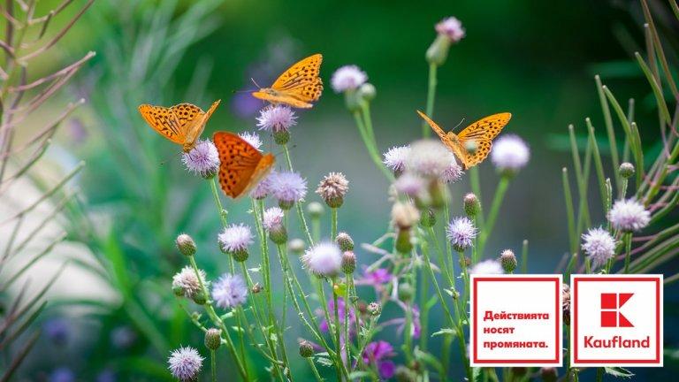 Kaufland представя в доклад ангажимента си за устойчиви цветя и растения