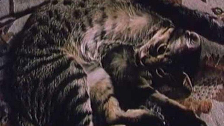 Надценен: Патилата на Спас и Нели (1987), 64 място  Фарсова комедия за непослушни куче и котка, които са изгонени от своите стопани и биват похитени от разбойника Павел Поппандов и фокусника Георги Мамалев. Дори да е забавлявал публиката при излизането си на екран, днес филмът на Джеки Стоев и този жанр като цяло изглеждат безвъзвратно остарели.