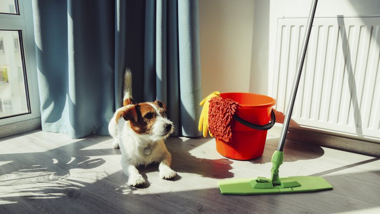Пролетта е времето за пролетно почистване, което е супер за дома ви, но ако имате животно, трябва да се съобразите с него. Използвайте препарати, на които е указано, че са безопасни при поглъщане от животни, или дръжте онези, които не са, на място, на което кучето не може да ги докопа.