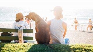 Насред кризата с епидемията от морбили, антиваксърските кампании започват да достигат и до кабинетите на ветеринарите