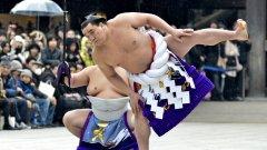 Роден в Монголия, Харумафуджи се превърна в истинска знаменитост в Япония
