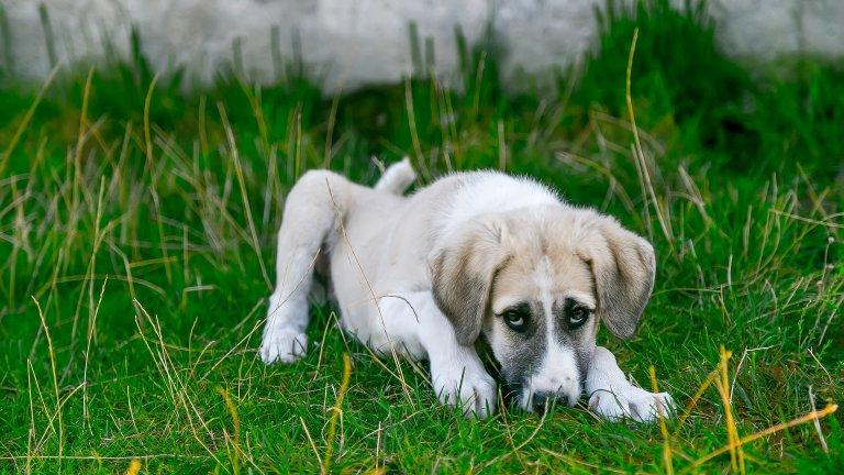 Скрийте антифриза. Много кучета харесват вкуса му, защото е сладък, но е и смъртоносен. Така че ако сипвате антифриз в колата, внимавайте къде оставя тубата след това.
