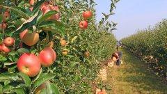 Поглеждаме към корените на това старо взаимодействие между българите и земеделието в Европа във време, в което фермерите започват да се питат могат ли и с какво да заменят сезонните работници мигранти