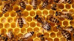 Пчеларите отправят 12 искания към земеделското министерство