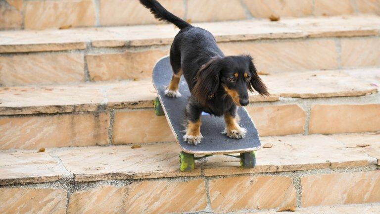 С пролетта идват по-топлите дни и, съответно, започваме да водим кучето по-често в парка и в заградените за кучешка игра пространства. Това е и времето да обърнете внимание на евентуални признаци, че кучето ви тормози другите или става обект на тормоз. Социализацията и играта са ключови за добрия кучешки живот, но ако забележите промяна в поведението му, по-високи нива на агресия или повече страхливост, когато общува с други кучета, адресирайте проблема своевременно с помощта на кучешки дресьор.