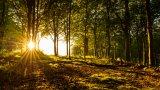 Йога, готварски книги и прозорец с гледка към гората: Хуманните затвори на Скандинавия