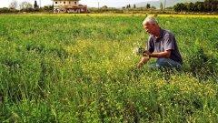 Една четвърт от българското население би могло да се изхранва от събиране и преработване на билки, ако се въведе контрол и те се отглеждат, берат, преработват и изнасят у нас разумно. А сега, въпреки изискванията на закона, много от берачите не са обучени в тънкостите на събирането на лечебните растения