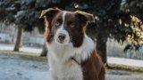 Хибридните породи кучета всъщност са направени с идеята да съчетават най-добрите качества на своите родители от различни породи. В галерията ще ви покажем някои от най-сладките, приятни и любевобвилни породи, създадени по изкуствен път.  Това е борадор: микс между бордър коли и лабрадор. Любопитни, енергични, нежни кучета, наследили в общия случай добрите черти и на двете породи. Те са среден до едър размер и са подходящи за хора с активен начин на живот, тъй като са доста подвижни и се радват на чести и дълги разходки. Счита се, че интелектът на тази порода съответства на този на двегодишно дете.