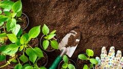 """По препоръка на МОСВ следващите десет растения попадат в черния списък """"Не садете това у дома"""":"""