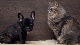С малко помощ те могат да съжителстват спокойно и да не се гледат от различни точки на къщата като заплаха едно за друго