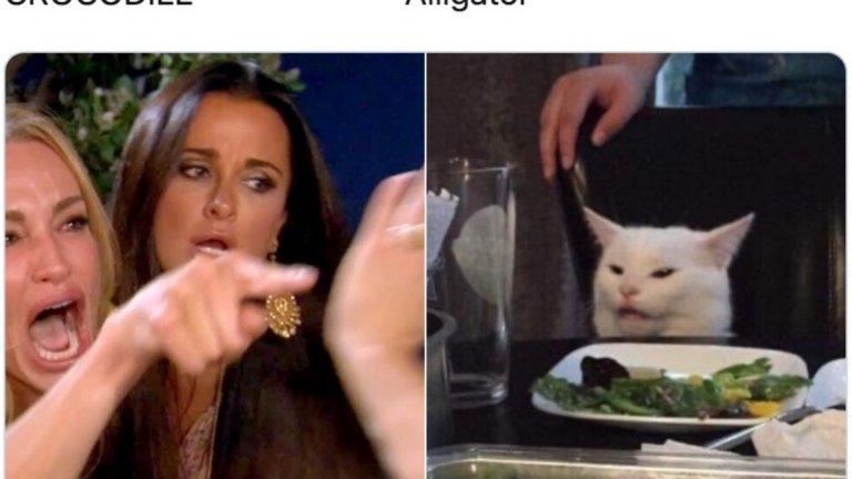 Мрачната история на жената, която крещи на бялата котка