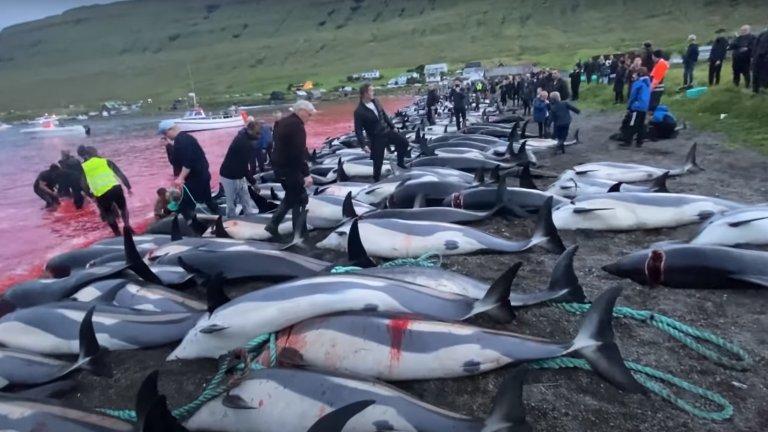Древен обичай на Фарьорските острови, който обаче все повече привлича международни критики