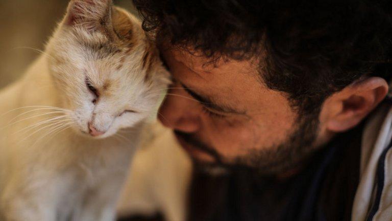 В трудните времена на войната в Сирия котките и хората са подкрепа едни за други