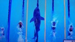 Въпреки 23-те си златни медала в олимпийския басейн, Майкъл Фелпс нямаше шанс срещу Голямата бяла акула