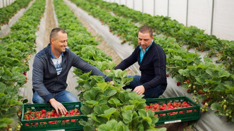 За 2019-а компанията продаде 35 милиона килограма български плодове и зеленчуци