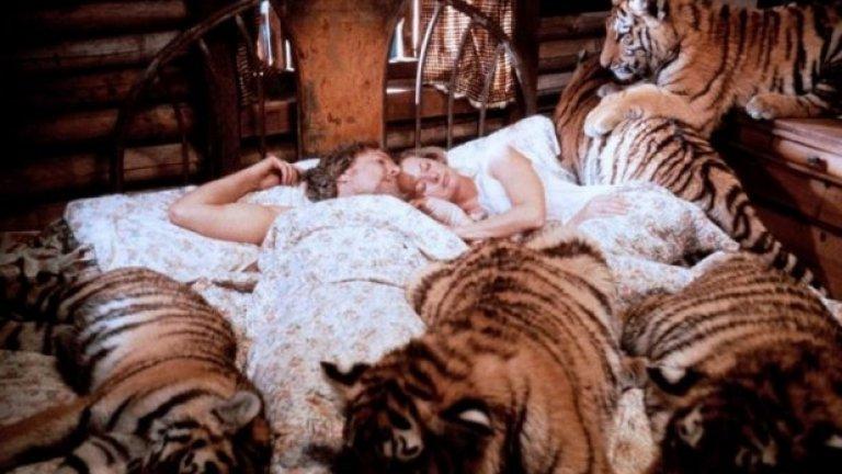 """""""Всъщност не е имало особен сюжет. Оставили са го отворен, защото не са имали представа какво ще направят лъвовете всеки ден, така че голяма част от филма е импровизация"""", разказва експертът по филма Тим Лийг"""