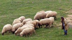 В село Бозвелийско е регистрирана починала овца, като лабораторните проби са доказали заболяването антракс