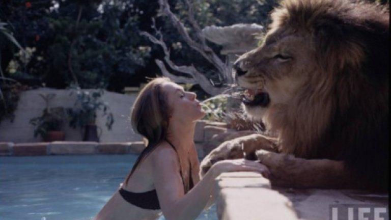 """70 души постарадаха, за да създадат холивудския кич """"Roar"""", в който се снима 19-годишната Мелани Грифит и нейното лудо семейство"""