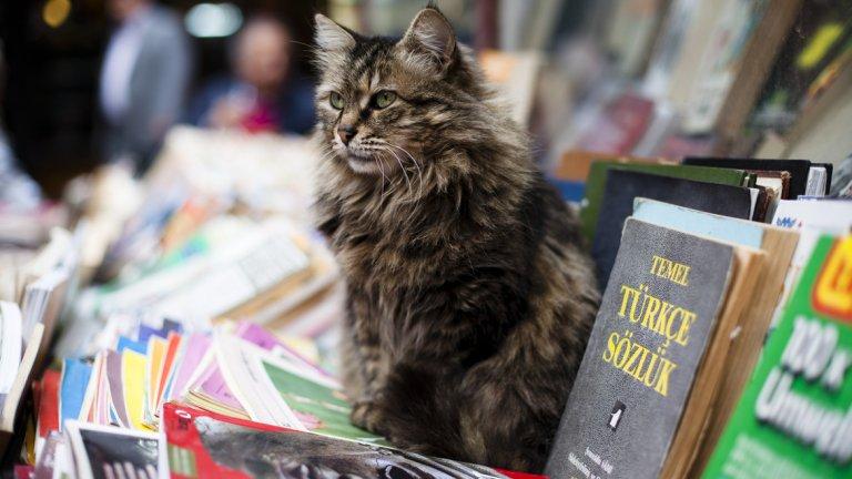 В Истанбул полудивите котки са хранени и са обект на грижи от местните жители. Те са станали част от идентичността на града, като дори наскоро послужиха като тема за актуален документален филм.