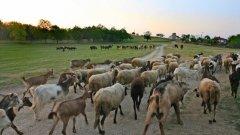 Държавата ще стимулира изкупуването на българските млечни продукти