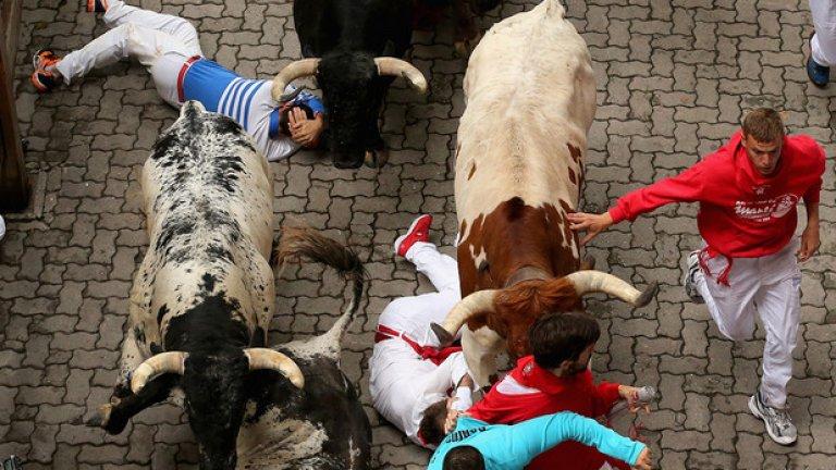 Бикове от фермата в Торестрела прегазват неуспелите да се задържат прави, докато се надбягват с биковете във втория ден на фиестата