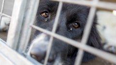 Пожар уби куче, настанено във ветеринарна клиника в Овча купел