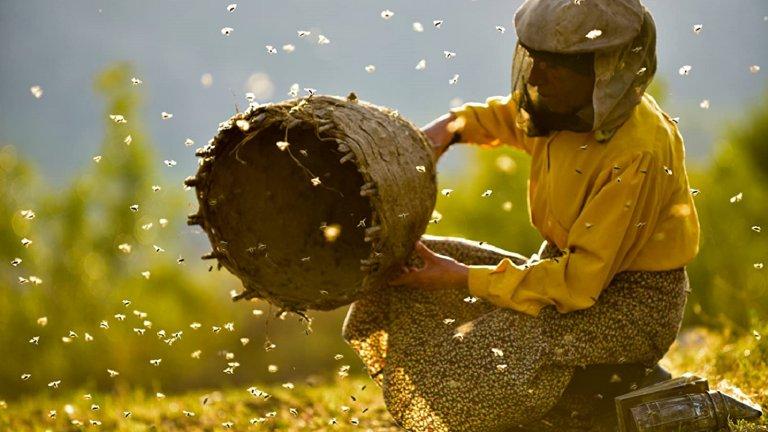 """""""Медена земя"""" (Honeyland)Година:2019Северномакедонският филм на Тамара Колевска и Любомир Стефанов взе три награди от """"Сънденс"""" и беше номиниран за """"Оскар"""". В ядрото му лежи историята на Хатидже Муратова - една от последните жени пчелари в Европа, която живее в изоставено село в провинцията. Всичко обаче се променя, когато там се нанася семейство с меркантилни интереси, които нарушават създадения баланс между човека и природата. Историята им показва и нагледно как човекът може да се превърне в истински унищожител, когато не уважава онова, създадено преди него. Филмът е достъпен в Amazon Prime."""