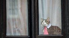 Какво се случва с котката след ареста на създателя на WikiLeaks