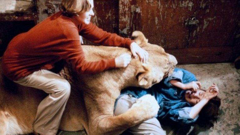 """""""Има сцена, в която Мелани е притисната на пода, докато лъв я хапе и удря с лапа. Тя пищи за помощ, а майка й Типи на свой ред крещи на Джон и Джери. Това са реални викове за помощ. Има и друга сцена, където буркан с мед пада от рафт и медът покрива лицето на Типи, а пантера влиза и го облизва. Този кадър не е бил пробван предварително и Типи се е бояла, че вместо да оближе, пантерата би избрала да захапе"""""""