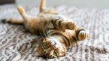 Котките са единственото асоциално животно, което успешно сме опитомили. Разочарова ни, че не се сближаваме с тях толкова лесно, колкото с кучетата. Но дали просто не пропускаме знаците за настроенията им?