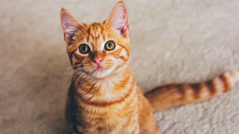 Над 200 котки бяха избити за месец в малко курортно градче във Франция