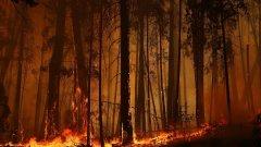 Трети е с тежки изгаряния. Междувременно пожар има и край Старосел (снимката е илюстративна)