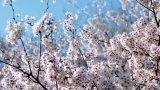 Най-после: пролет за Цветница